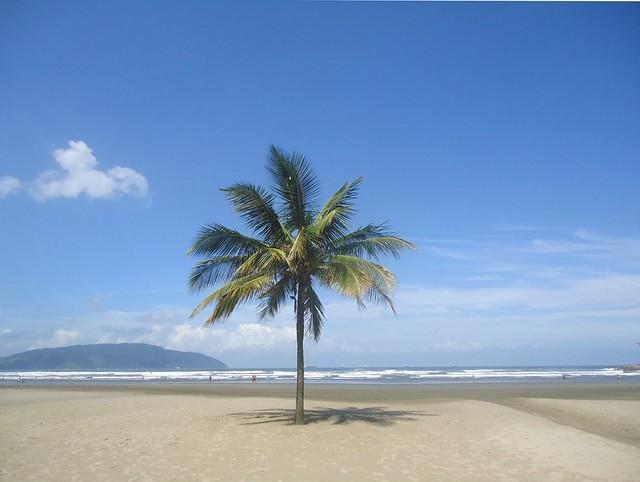 Tropical tree in the autumn sun.