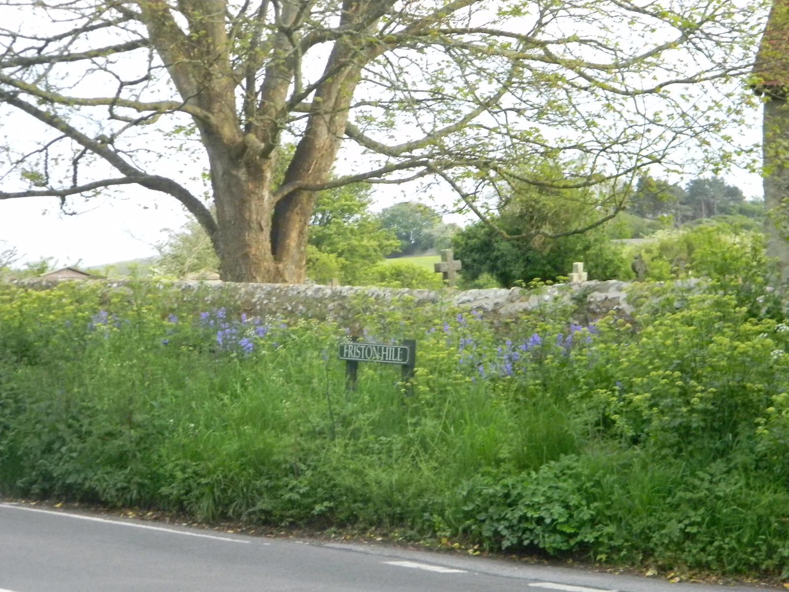 Verdant wall, Friston Berwick to Birling Gap