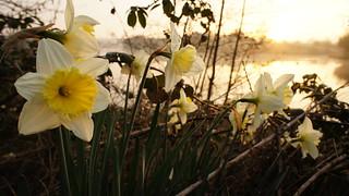 Undergrowth | by Mark Buchan Jones