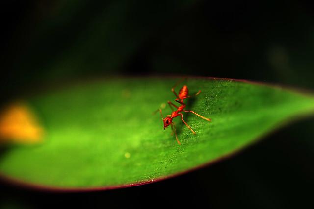 Ant Trek