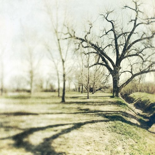 morning grass canon vintage square spring shadows ditch cottonwood depth textured treed t1i
