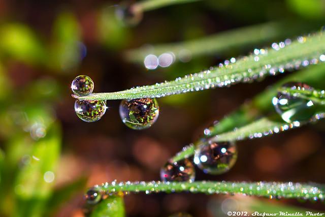 337/365 [365 Project] - Three Water Drops