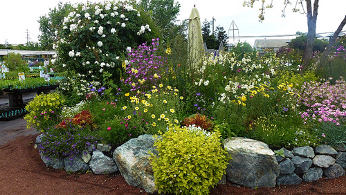 SMALL Spring Garden U BED  left side full bloom | by anniesannuals