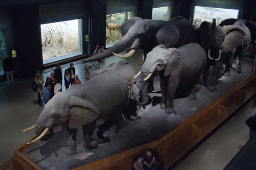 African Hall, American Museum of Natural History | by InSapphoWeTrust