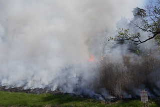 Thinning smoke, revealing charred remnants