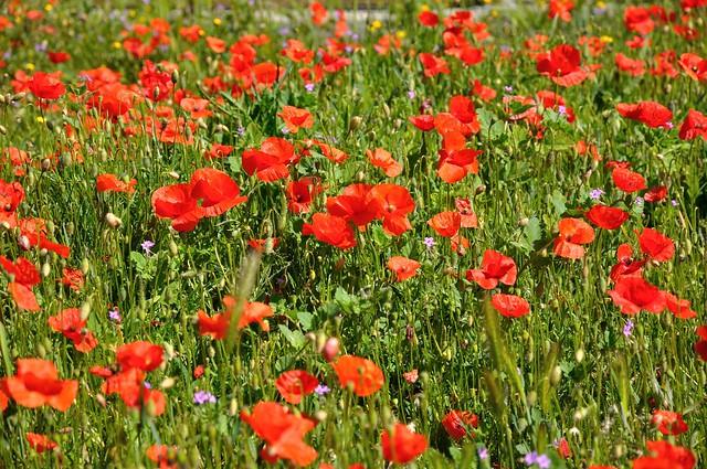 Spring  it's now ! / Le printemps c'est maintenant ! - 2/2