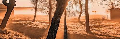 trees light mist grass fog sunrise fence shadows brightlight monday tones baretrees sundawn warmcolour cmwd nederlandvandaag