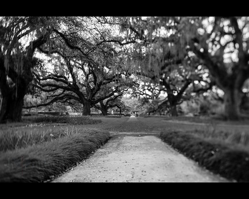 trees usa sc gardens landscape moss spring oak live southcarolina spanish filter lee brookgreen tiltshift murrellsinlet liveoakallee nikonwideanglepcenikkor24mmf35ded