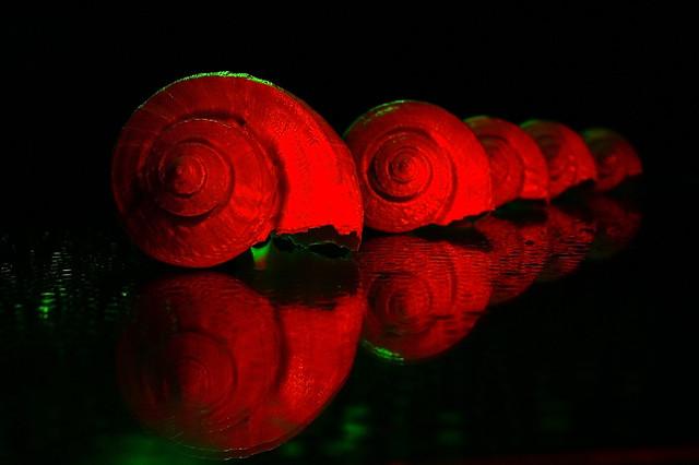 Shells [EXPLORE Mar. 24, 2012 #293]