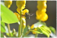 Hurgando la flor Part3