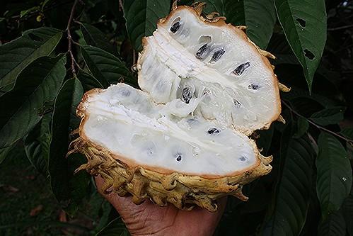 Rollinia mucosa (Jacq.) Baill.