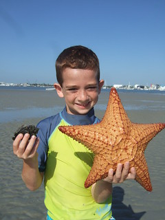 Samuel finds a big cushion starfish. | by AdventureMIke.com