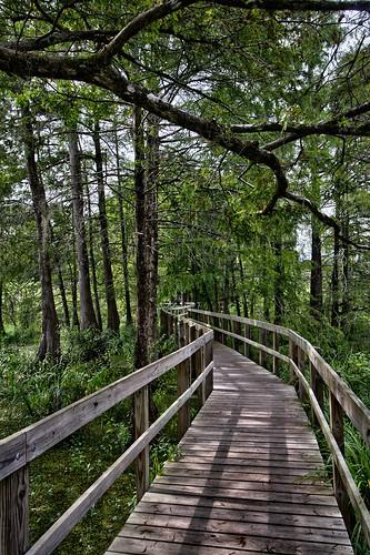 nature landscape woods louisiana swamp 15mm cypresstrees canonefs1022mmf3545usm lakemartin mrgreenjeans gaylon gaylonkeeling