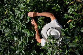 Nariño Coffee 4 | by CIAT International Center for Tropical Agriculture