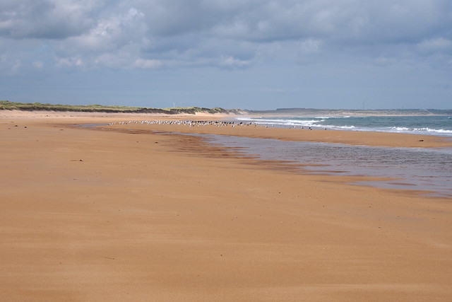The coast north of Rattray Head, Aberdeenshire