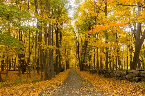 autumn trees newyork fall fallcolors autumncolours driveway westchestercounty southsalem westlane lewisboro sonydscrx100