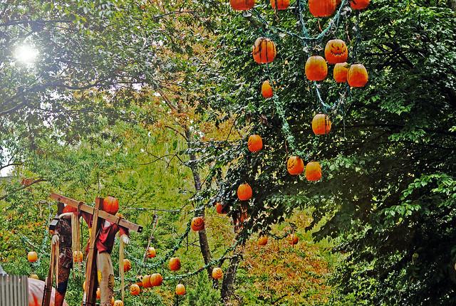 Busch Gardens Howl-O-Scream - Williamsburg, Virginia - HDR