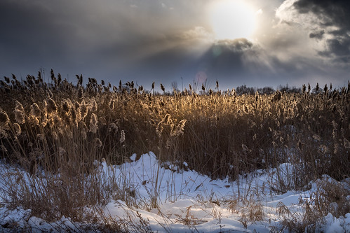 backlit weeds sun snowshowers sunset ataredecer snow winter invierno canoneos5dmarkiv ef24105mmf4lisusm clouds drama cold michigan midmichigan baycity bysugarplant