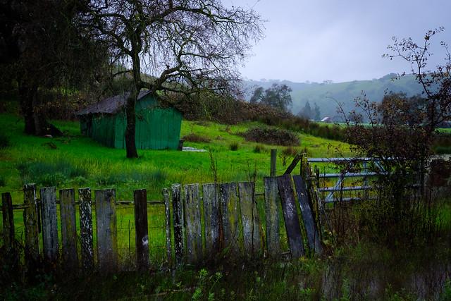 Rain 1568