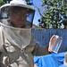 Marking Queen Bees