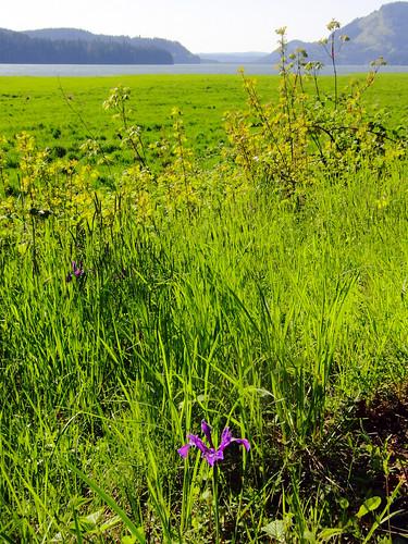 iris lake oregon river row trail dorena
