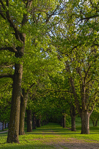 trees sunset kansas hdr fortleavenworth
