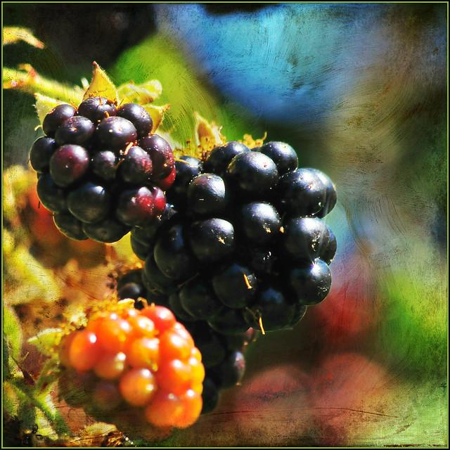 blackberry wine . . .