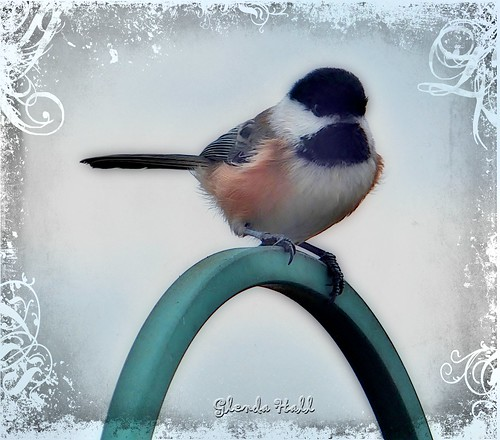 autumn holiday ontario canada cute bird art texture nature pose october fuji feathers gimp cutie georgetown chickadee tiny finepix swirls 2012 exr specanimal f770 tatot skeletalmess royalgrunge glendahall