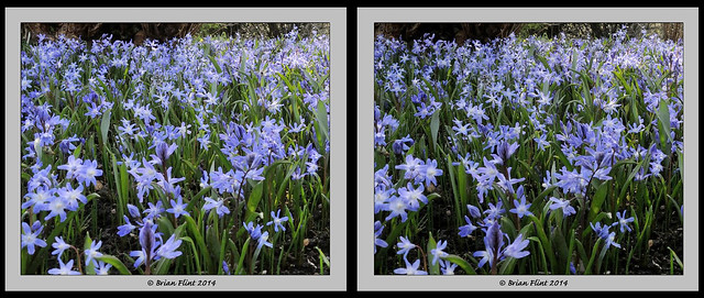 A sea of blue - 3d crossview