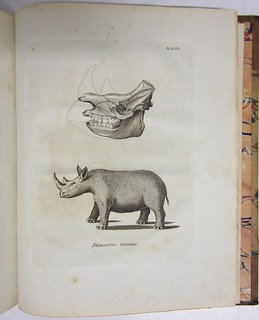 Rhinoceros bicornis. | by Library & Archives @ Royal Ontario Museum