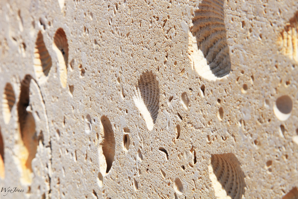 Image result for fossiliferous limestone building texas
