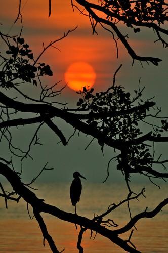 sunset beach silhouette paradise crane johor muar thegalaxy westmalaysia muarriver mygearandme