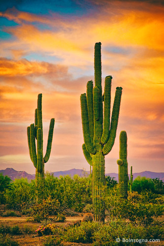 sunset arizona cactus sky southwest art nature phoenix beautiful clouds sunrise canon landscape colorful desert tucson scottsdale sonoran epic hdr saguaros jamesinsogna