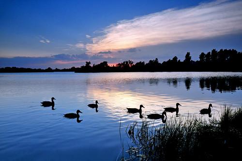 sunset reflections ducks kansas mallard wichita chisholmcreekpark