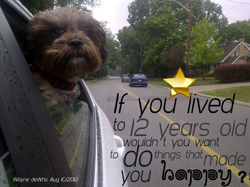 Life lesson from a dog | by WayneWho?