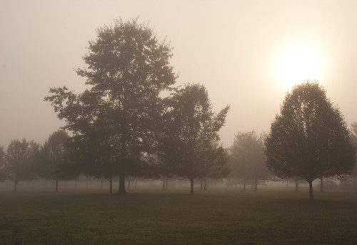 county morning trees tree field fog sunrise silent pennsylvania pa silence getty bucks flickrnova