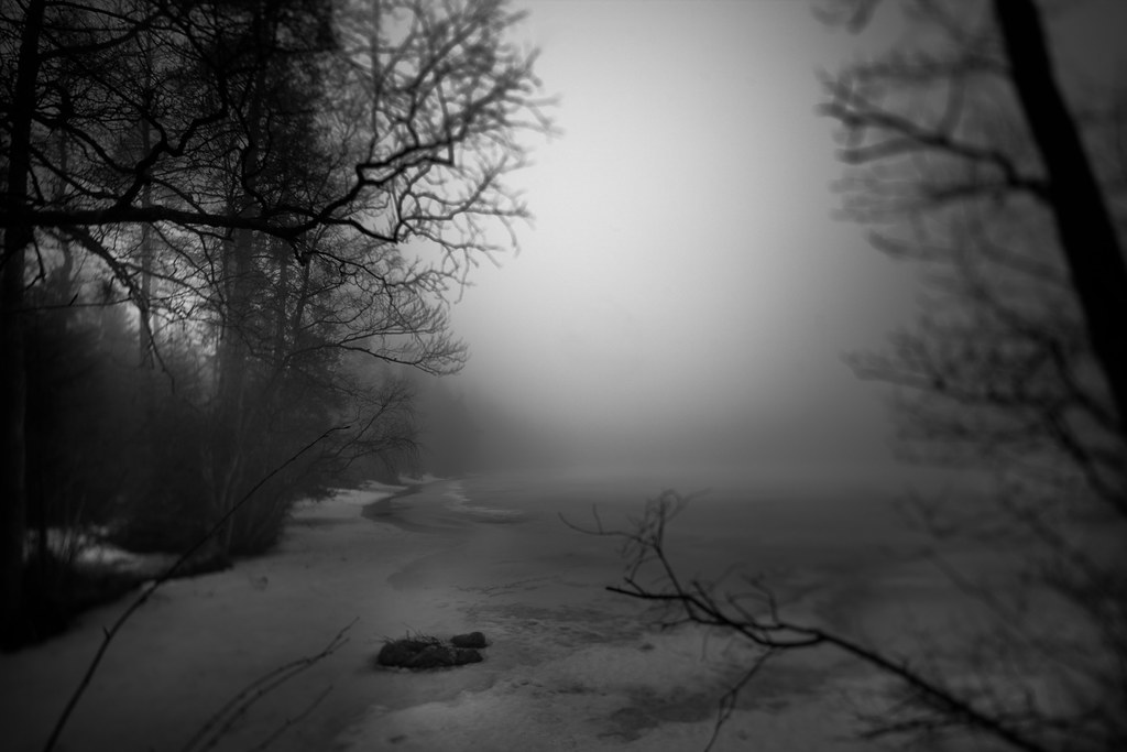 Flickr: 77/366 – Dark Forest by Andreas Øverland