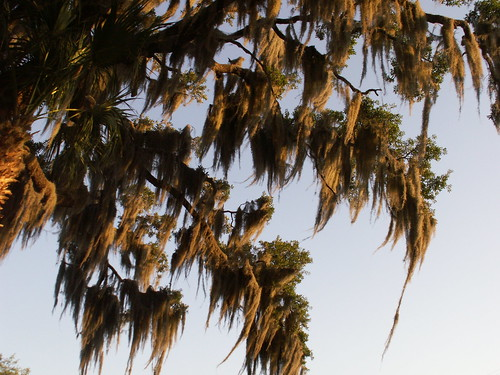 spanishmoss fl inverness citruscounty libertypark lakehenderson