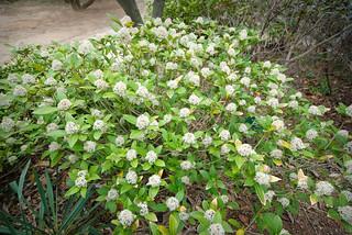 2010.5.5~6 Taean(Chollipo Arboretum) | by revoldaw