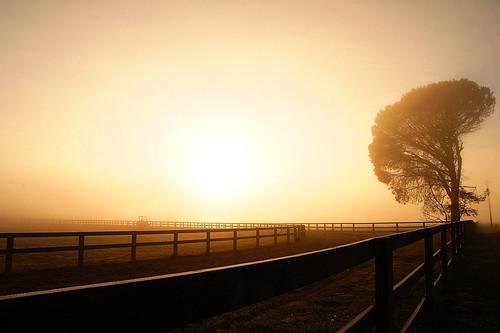 morning tree nature fog rural sunrise landscape 5 sony australia nex castlereagh