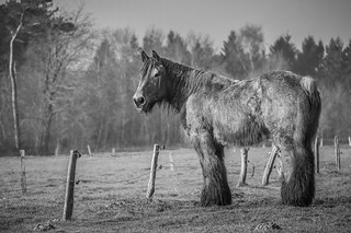 Gentle Giant Old in B&W