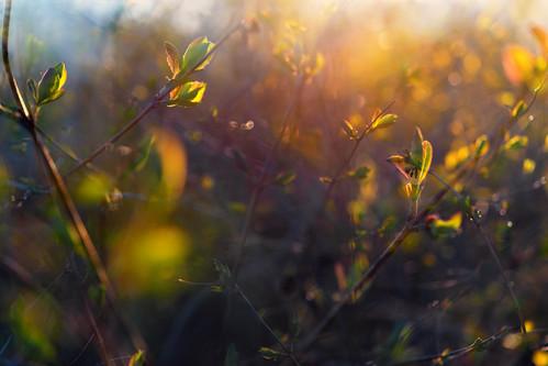 light sunset bush leaf bokeh dof multiexposure multipleexposure tripleexposure park helsinki helsingfors finland suomi pekkanikrus skrubu pni pni3xp