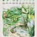 Rikasta luontoa -juliste / Biodiversity poster