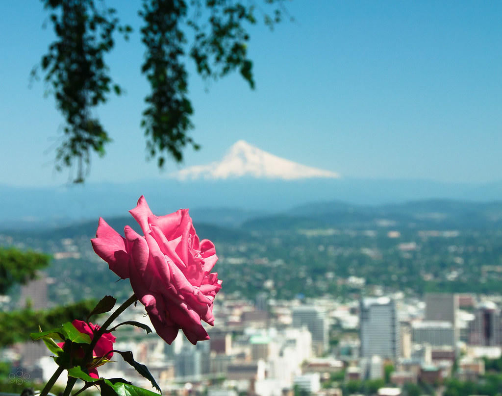 The Rose City: Portland, Oregon | Shot from the Pittock Mans… | Flickr