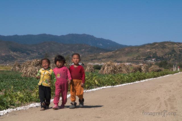 Cooperative Farming (North Korea)