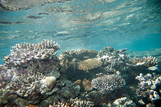 House Reef | by Paul and Jill