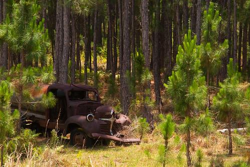 wood old chevrolet abandoned forest truck junk rust automobile decay 1940 explore chevy forgotten flattire wreck derelict d5000 flickraward