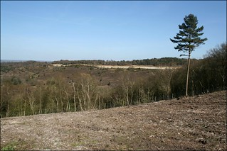 Hindhead common | by JonCombe