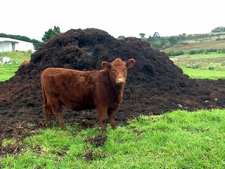 Cow Manure | by barbourians