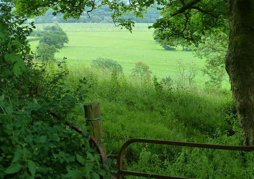 summer tree green june fence landscape countryside scenery gate cattle cows meadows lancashire explore fields ribblevalley hothersall lancashirelassphotos suebristo